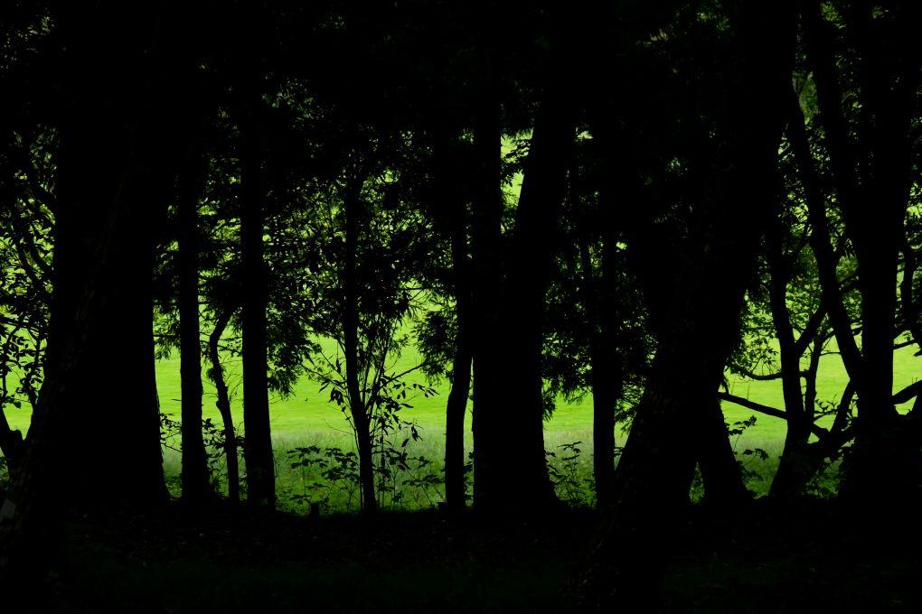 自然の緑と作品の色