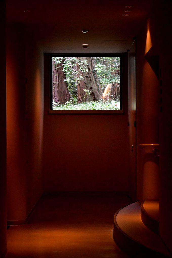 作品「窓の緑」