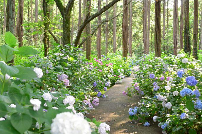 多様な花の自然な色彩