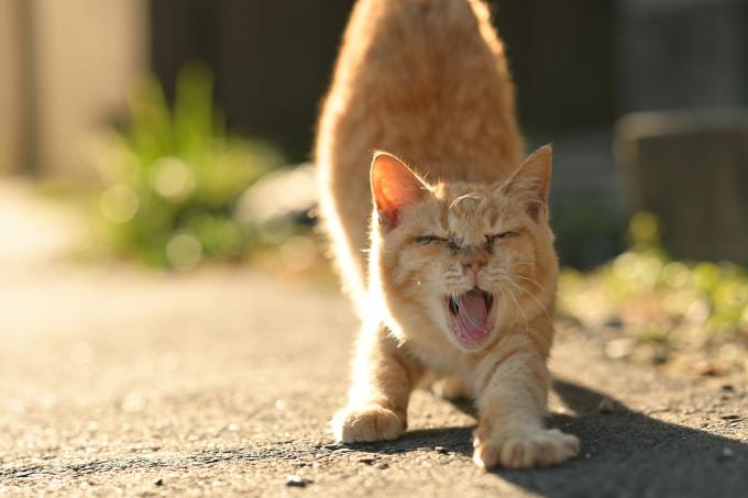 半日だけでも旅感満喫のネコ撮影の旅「福岡県相島」