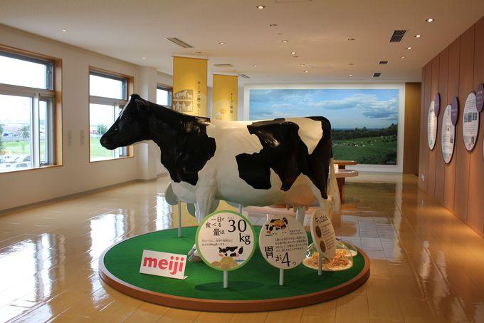 牛についても学びます!