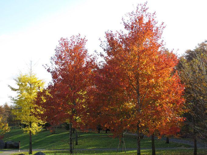 園内の木々は鮮やかな赤や黄色に染まっています!