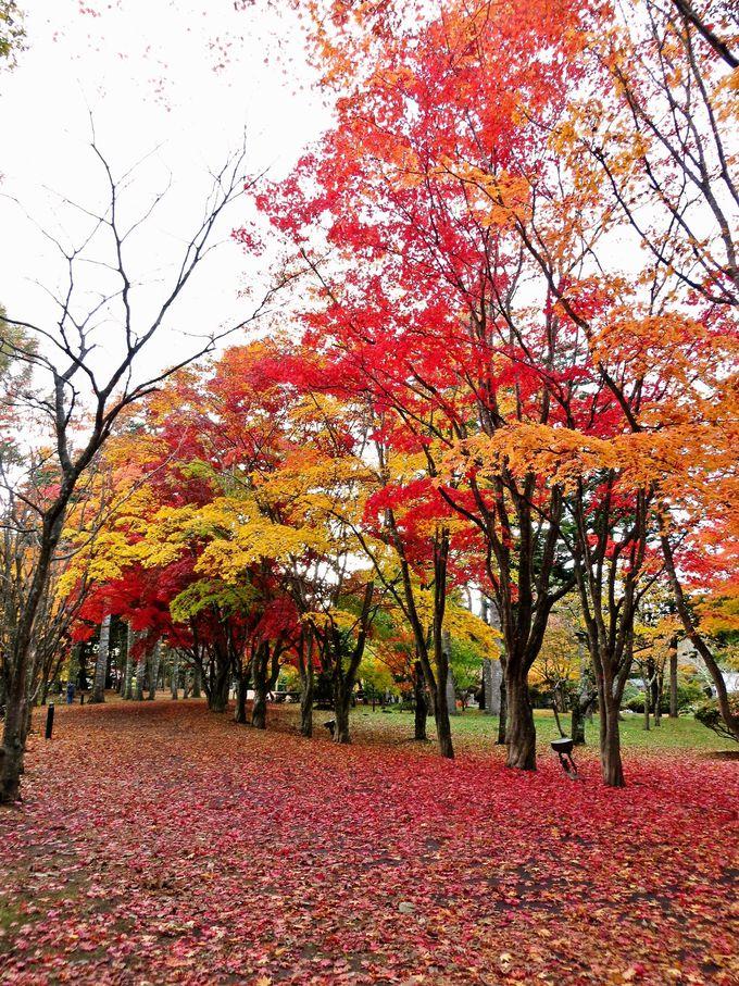 穴場観光スポット「見晴公園・香雪園」で楽しむ紅葉鑑賞