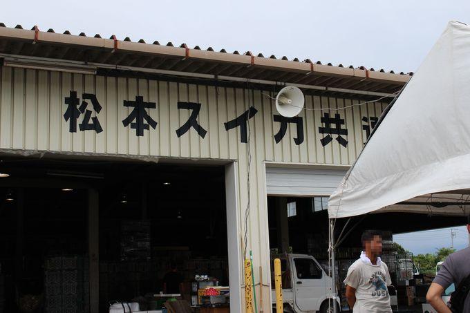 JA松本ハイランド「すいか共選所」にも行ってみましょう!