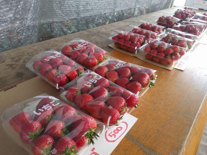 ワケありイチゴは山盛り1パック250円!