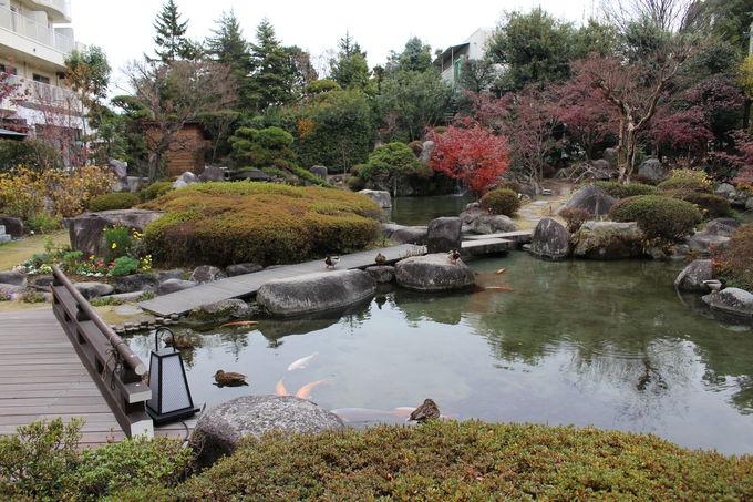 自慢の日本庭園!鯉のエサやりも!