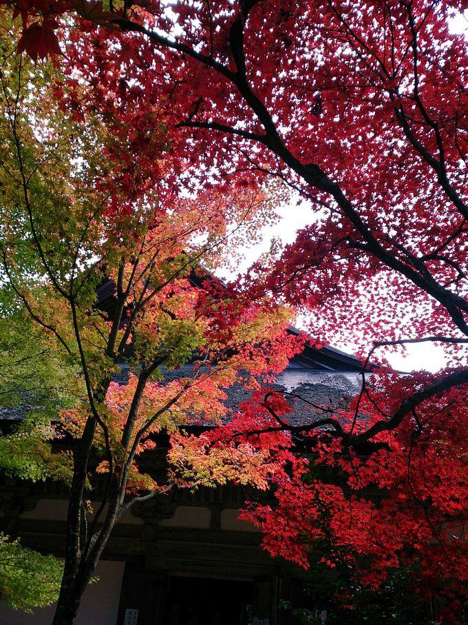 湖東三山、真ん中の「金剛輪寺」