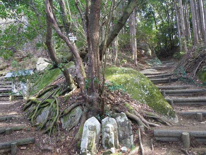 世界遺産「熊野古道」は三重県にも!伊勢路は、峠越えが続く祈りと再生の道