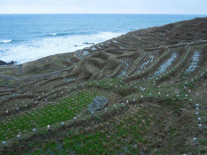 世界農業遺産の日本代表・白米千枚田