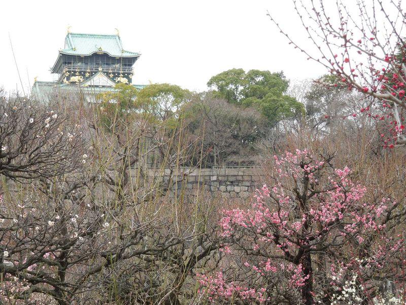 梅 大阪 城