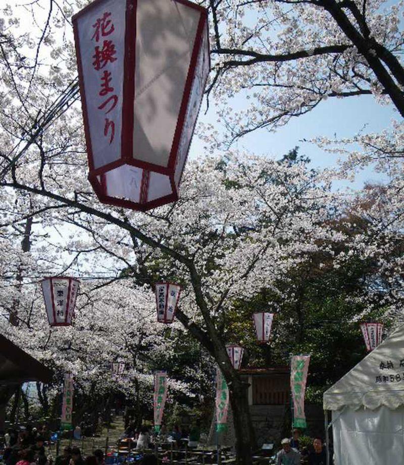 花換まつりで心も桜色に〜金崎宮(かねがさきぐう)