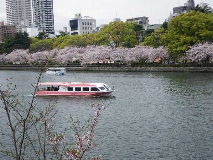 大阪の春を彩る大川の桜