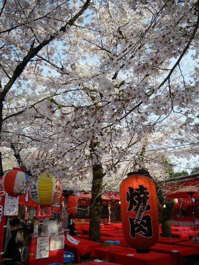 梅の『北野天満宮』、桜の『平野神社』