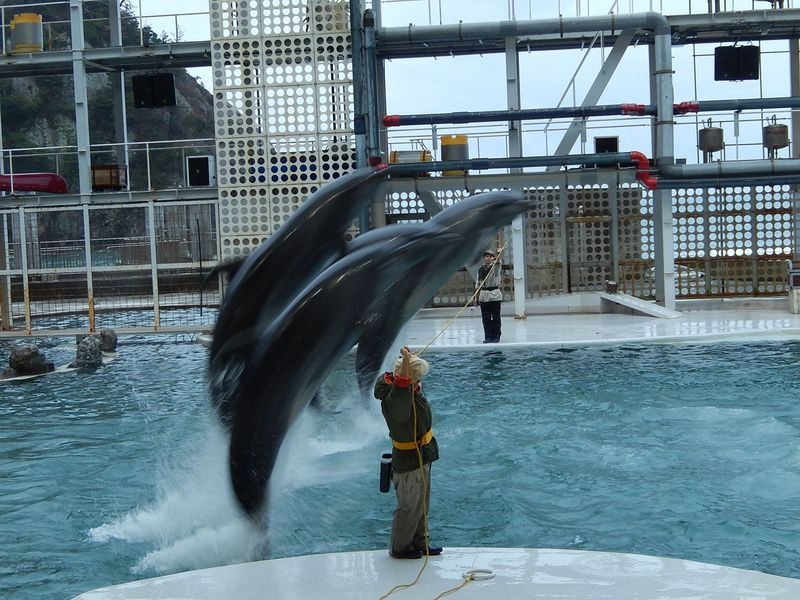 水族館以上、を目指す体験型水族館『城崎マリンワールド』