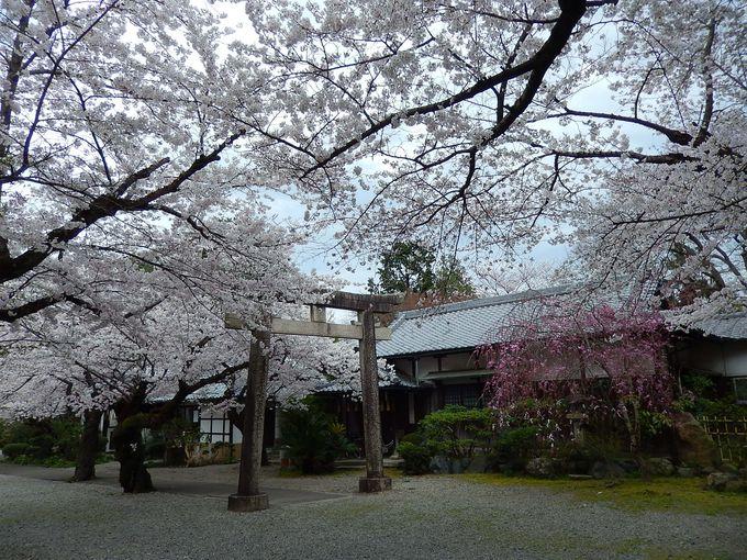 ナンバー3が、静かな『姫路神社』