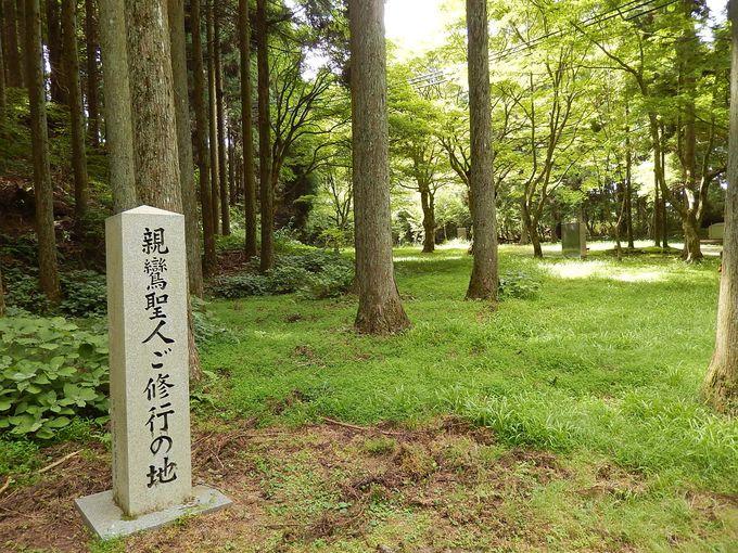 日本仏教の母なる山