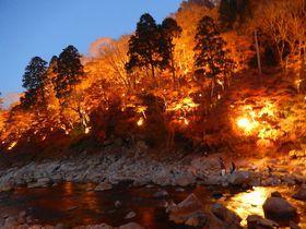 夜空に燃える紅葉!ライトアップが幻想的な豊田市『香嵐渓』