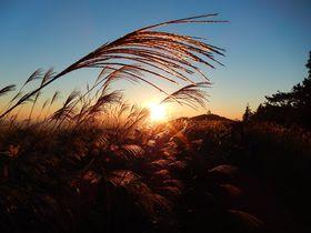 夕暮れ時が最高!関西百名山の生石高原のススキを観ましたか?