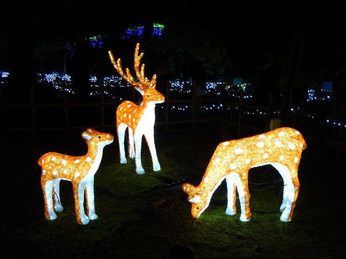 苑内で遊ぶ光る鹿たち
