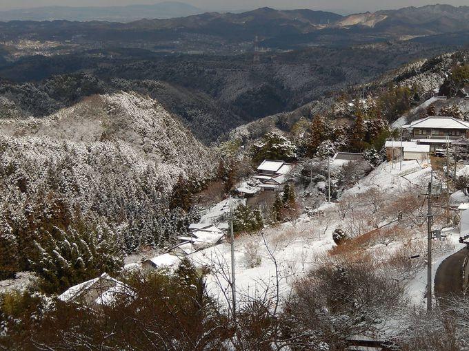 大和平野を見渡しながら『広橋梅林』の梅を楽しもう!