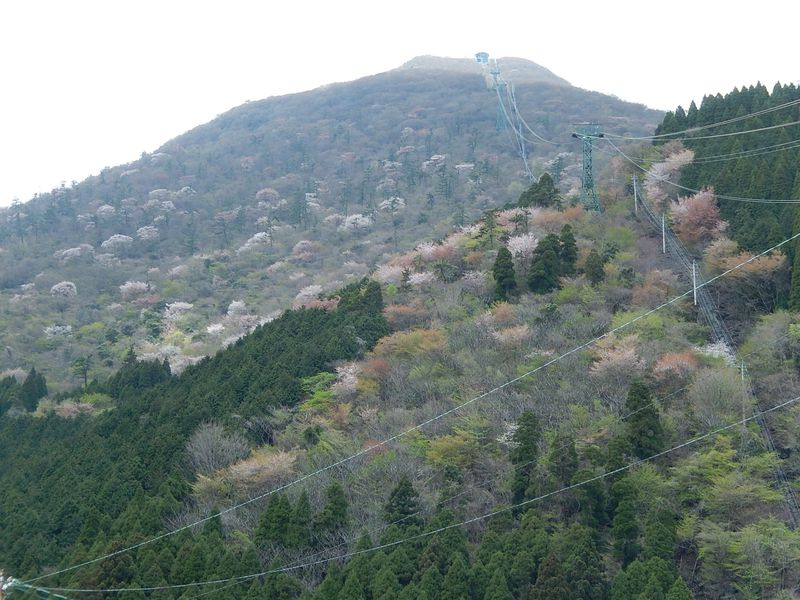 温泉の源『鶴見岳』へは、別府ロープウェイで