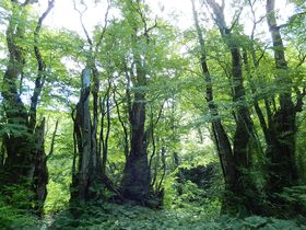 本当の深呼吸が出来る!岐阜・天生の森のカツラの門と籾糠山