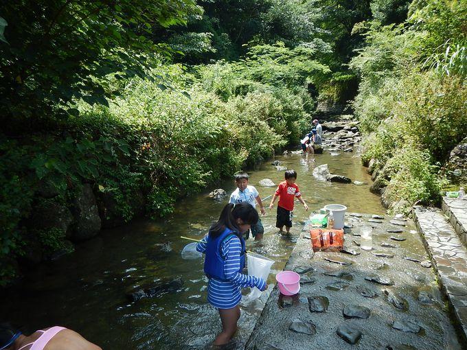 大人&子ども川遊びで大はしゃぎ
