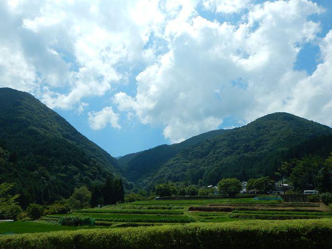 緑豊かな牛滝山の名前の由来