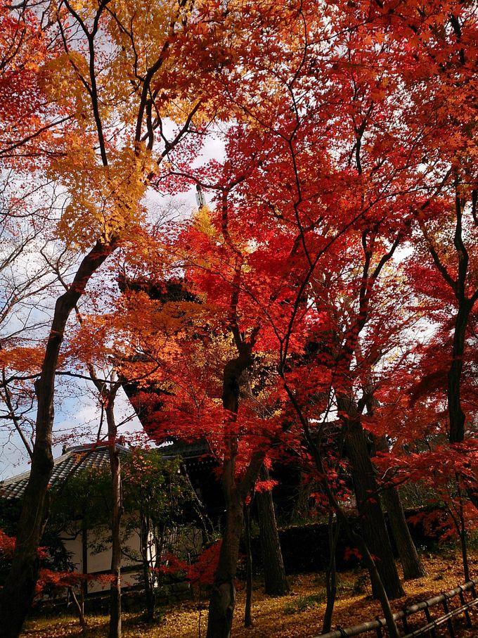 春は桜、夏は送り火、秋は紅葉の絶景ポイント