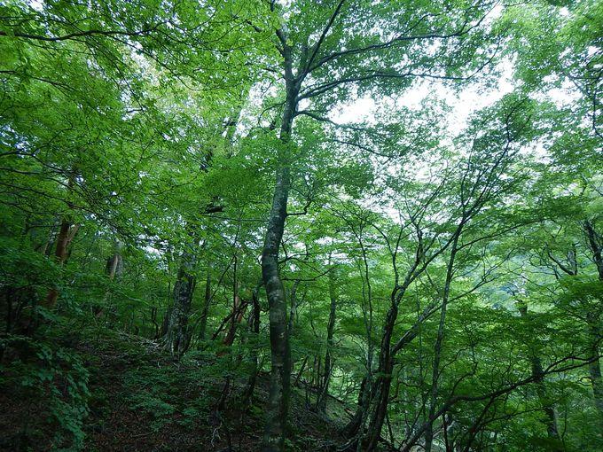 大峯奥駈け道から弥山へ
