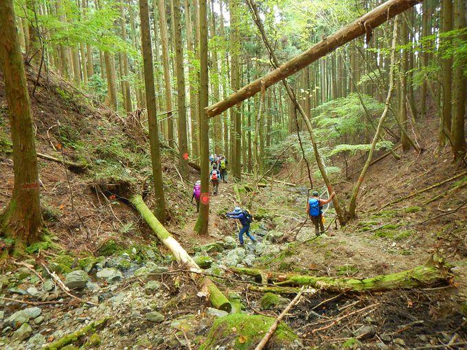 岩場か一般登山道か選択ポイント