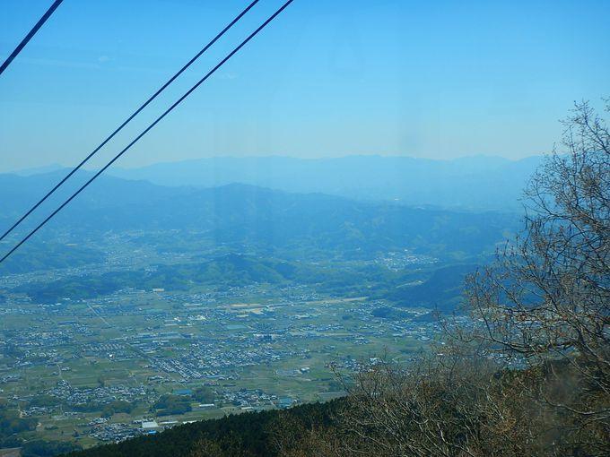 大和葛城山の山肌をツツジが埋め尽くす前の一瞬が見頃