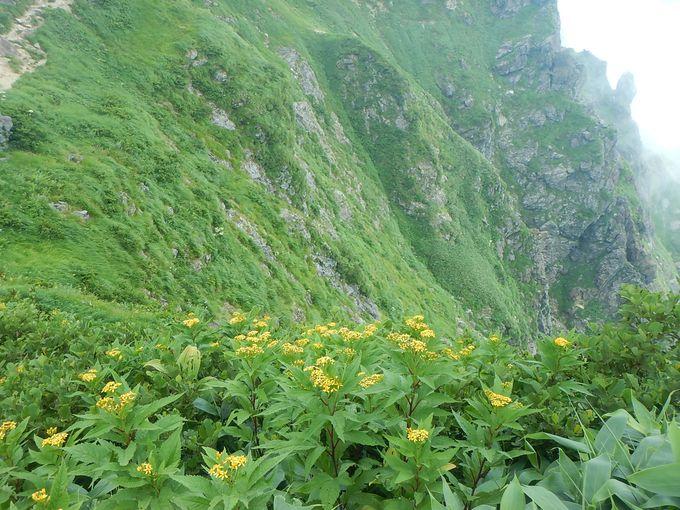 急峻な崖に広がるお花畑