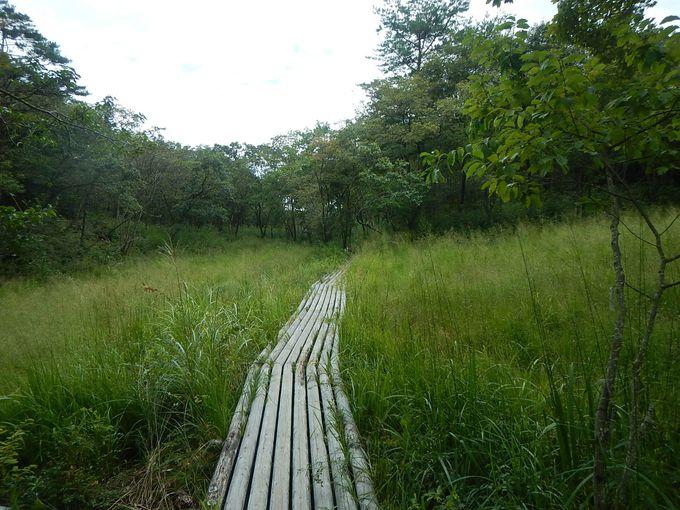 兵庫県最大級の貴重な湧水湿原・丸山湿原
