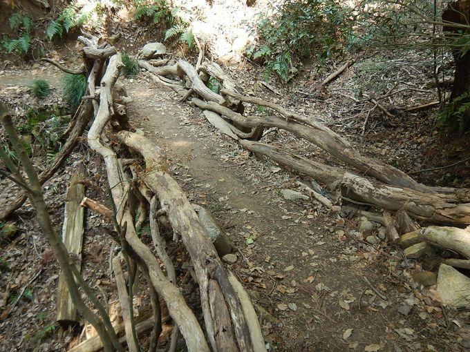 天然木の橋の欄干を楽しみつつ七兵衛山へ