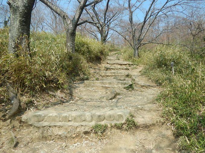 まだ咲かぬ桜並木を抜けて金鳥山へ