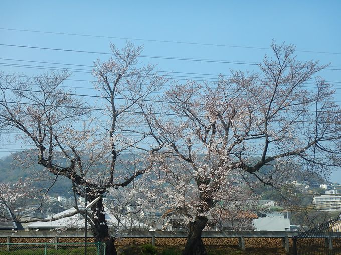 山桜やツツジを楽しみながら駅へ向かう