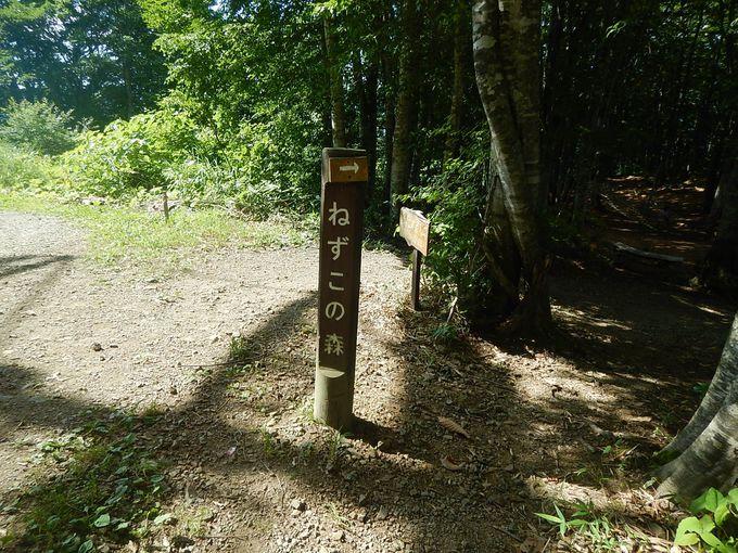 ふかふかの「ねずこの森」の極上散策