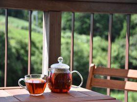 和紅茶に出会いどぶろく特区を訪ねる!奈良市東部地域の見どころ