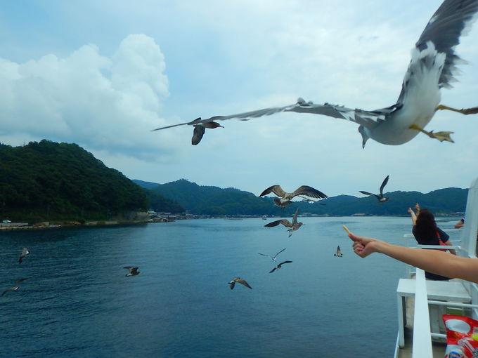 伊根湾めぐり遊覧船でカモメと戯れる