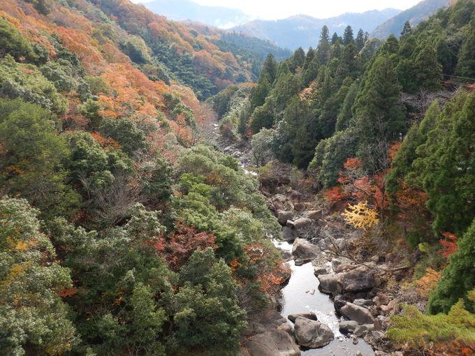 大江山連峰トレイルって?