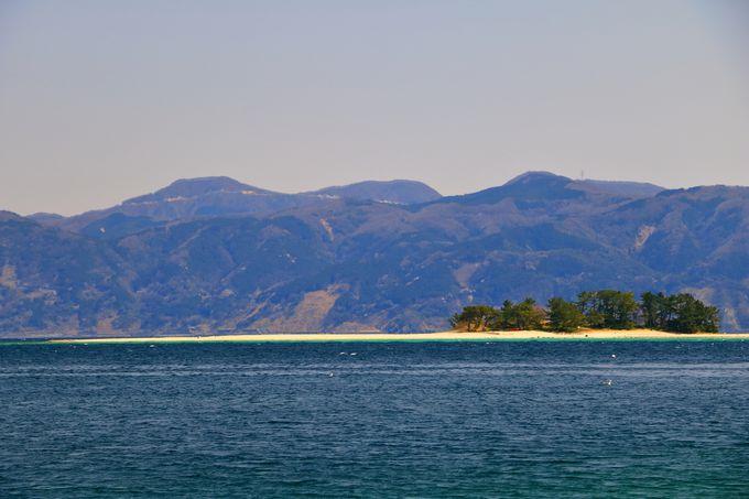 おだやかな敦賀湾に浮かぶ水島に千手ブナ