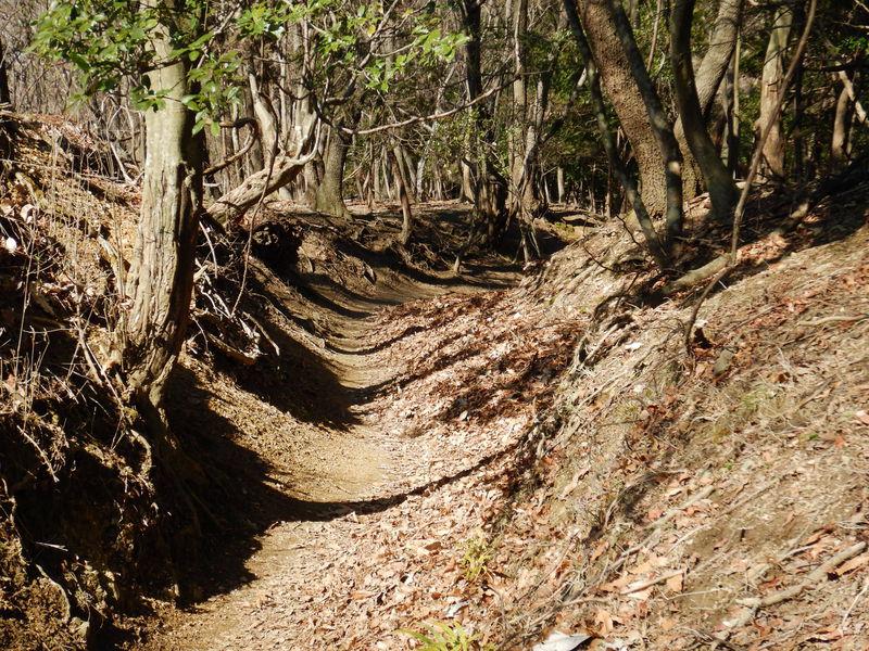 「上杉尾根コース」で下山