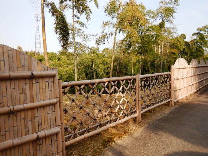 美しい「竹の径」を歩く!