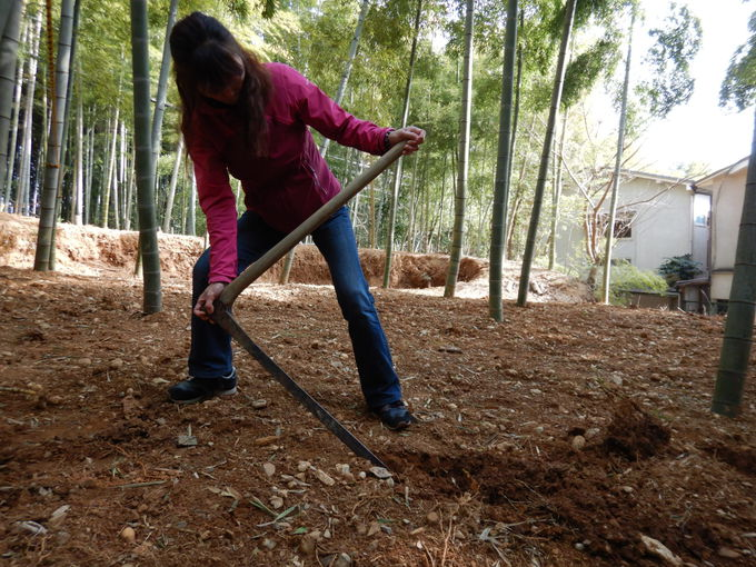 「タケノコ掘り」で最高級の真っ白なタケノコを掘る!