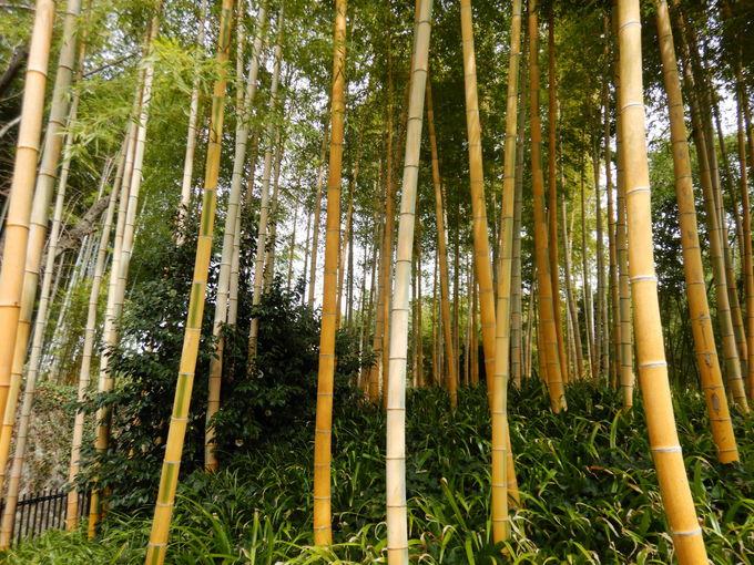 「竹林公園」で多様な竹を知る!