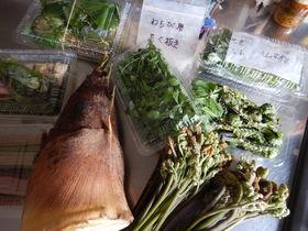 天然物の山菜をお取り寄せ!自宅で山菜祭りを始めましょう