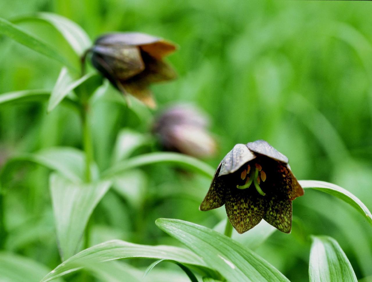 駒ヶ岳ロープウェイで花々とご対面
