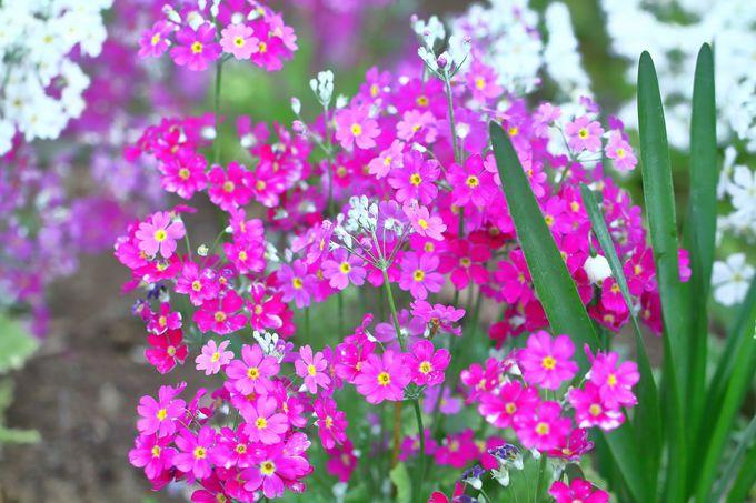 雪解け後なら花がいい!
