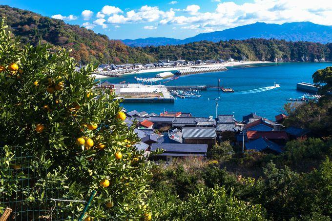 島四国八十八箇所と柑橘の山の景色